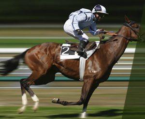 detail-caballos-2015